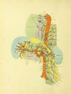 Colorful Diagram Of Nervous System In Relation To Internal