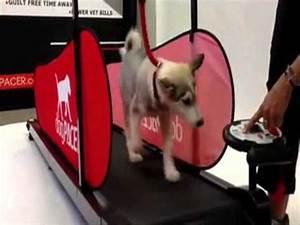 tapis roulant pour chien montreal With tapis de course pour chien
