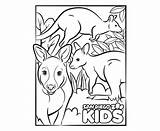 Wallaby sketch template