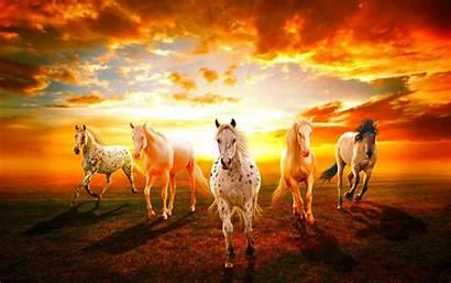 Horses Wild Horse Desktop Wallpapers Animals Computer