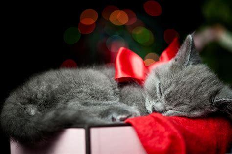 fond d 233 cran cat sleeping on a gift box my hd wallpapers