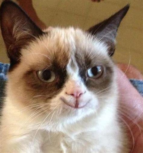 Make Your Own Grumpy Cat Meme - the grumpy cat smiling meme generator
