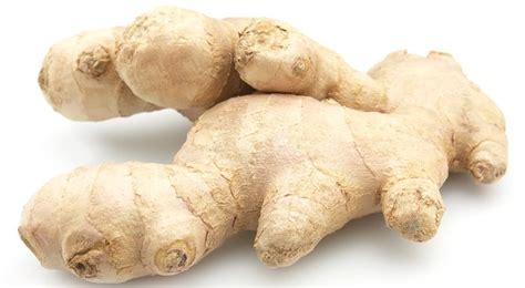 luminaires pour cuisine gingembre bienfaits et vertus quand planter du gingembre