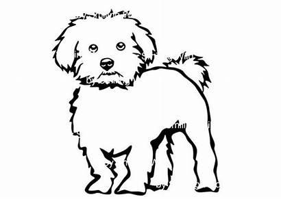 Maltese Dog Svg Clipart Printable Grpahic Cricut