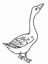 Goose Coloring Pages Angry Colouring Clipart Glass Netart Template Stained Animals Mother Ace Library Popular Results sketch template