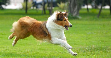 bewegung und beschaeftigung fuer alle hundetypen  goodstuff