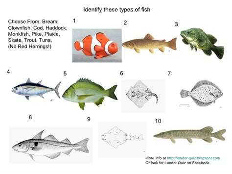 types  fish picture quiz