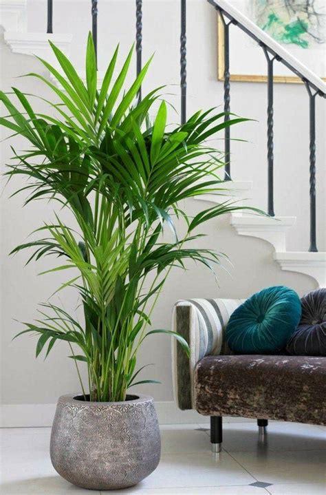 Pflanzen Für Wohnung by Kentia Palme Einrichten Und Wohnen Wohnzimmer Pflanzen