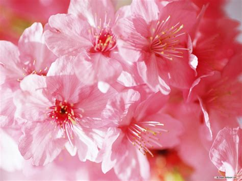 free pic of flowers spring flower wallpapers wide screen wallpaper 1080p 2k 4k