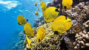 Underwater, World, Corals, Yellow, Fish, Wallpapers, Hd, For
