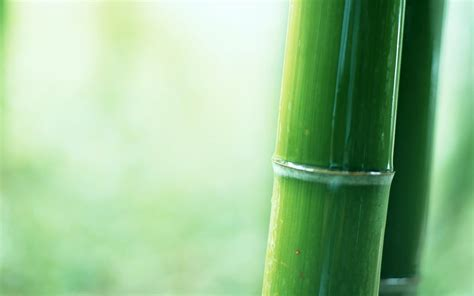 bamboo wall 幽静的竹林图片