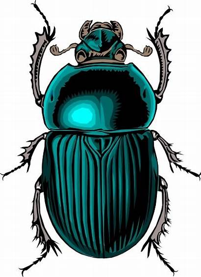 Clip Bug Beetle Vector Drawing 72kb Office
