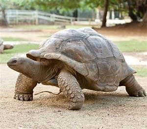 Acheter De La Terre : acheter une tortue de terre ce qu 39 il faut savoir ooreka ~ Dailycaller-alerts.com Idées de Décoration