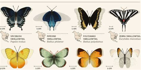 siege butterfly best infographic best infographics best free