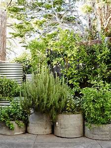 Hardy Outdoor Potted Plants
