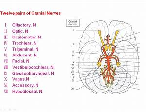 Cranial Nerves Sensory Motor