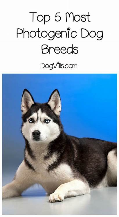 Photogenic Dog Breeds Most Dogvills Dogs