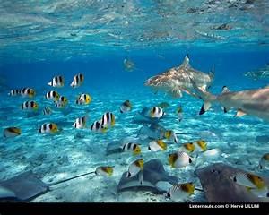 Fond Ecran Mer : fond ecran aquatique page 2 ~ Farleysfitness.com Idées de Décoration