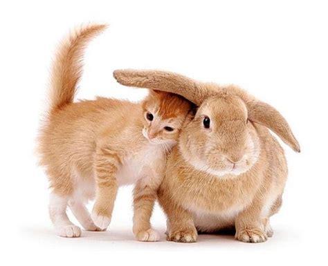 Cute Animal Friendship - Barnorama