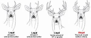 Antler Restrictions