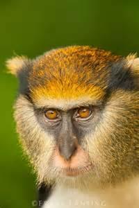 Monkey Sanctuary Ghana