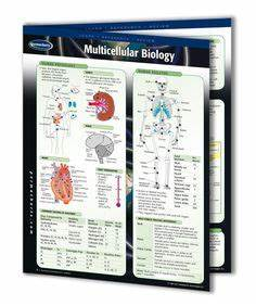 Poster sizes, Plant cell and Anatomy on Pinterest