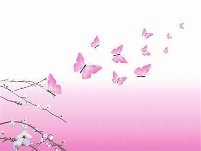 Butterfly Pink Beauty Background Butterflies Wallpapers Desktop