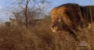 On The Hunt Running GIF by Nat Geo Wild - Find & Share on ...