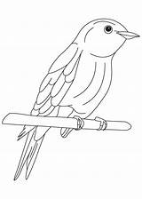Coloring Bluebird Bird Pages Happiness Eastern Drawing Drawings Getdrawings Popular Coloringhome sketch template