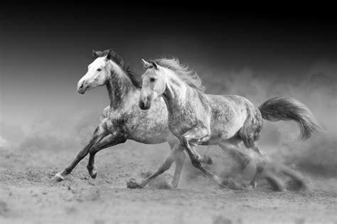 run horse gallop fast horses desert isolated
