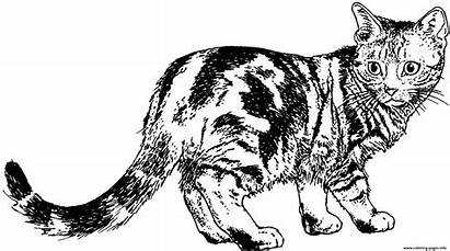 Coloring Cat Realistic Pages Animal Printable Kitty