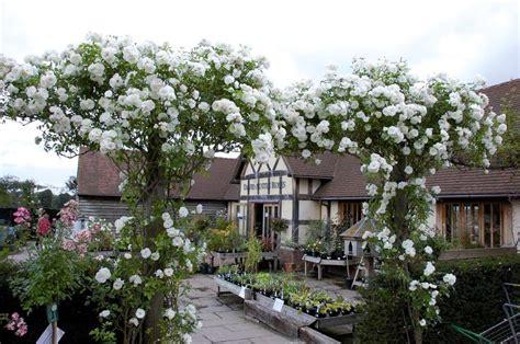 david garden 17 best images about david austin rose garden and plant centre on pinterest gardens shops and