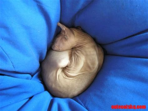 bold cat bold cat cute cats hq pictures of cute cats and kittens free pictures of funny cats and