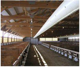 housing factors to optimize respiratory health of calves With barn ventilation systems