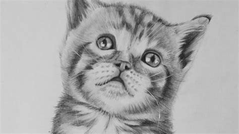 realistic cat drawing color sketch cute drawings