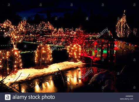 traditional christmas lights on trees vandusen botanical