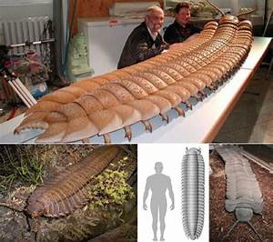 10 Prehistoric Bugs That Could Seriously Mess You Up ...