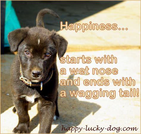 happy dog quotes quotesgram