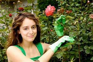 Rosenrost Was Tun : mehltau rosen behandeln und sch tzen ~ Lizthompson.info Haus und Dekorationen
