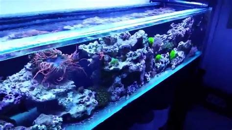 210 Gallon Reef Tank Project Youtube