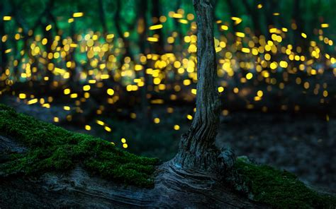 Incredible Photos Of Fireflies And Tips On How To Make