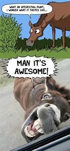 Funny horse cartoon plant memes