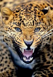Quel Matelas Pour Quel Poids : quel objectif choisir pour la photographie animali re safari fotoloco cours photo gratuits ~ Mglfilm.com Idées de Décoration