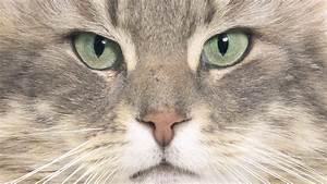 Katzen Fernhalten Von Möbeln : haustiere katzen katzen haustiere natur planet wissen ~ Michelbontemps.com Haus und Dekorationen