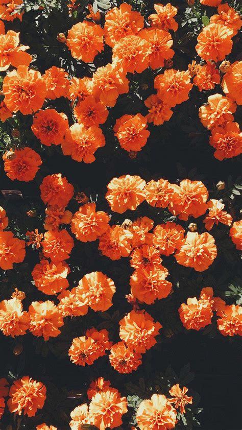 aesthetic orange hd wallpapers