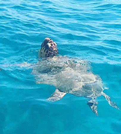 zakynthos turtle rescue center vasilikos