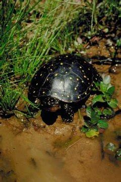 feed  pet river turtle animals momme