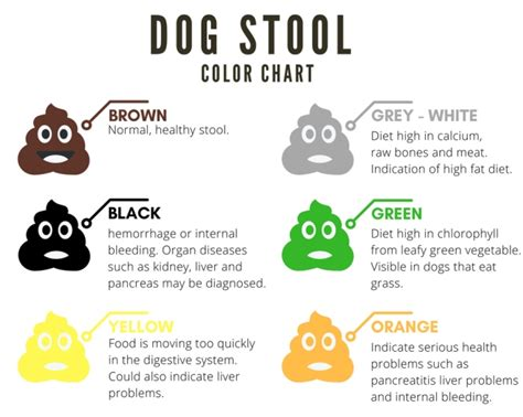 colors of stool a complete guide to s stool color shape