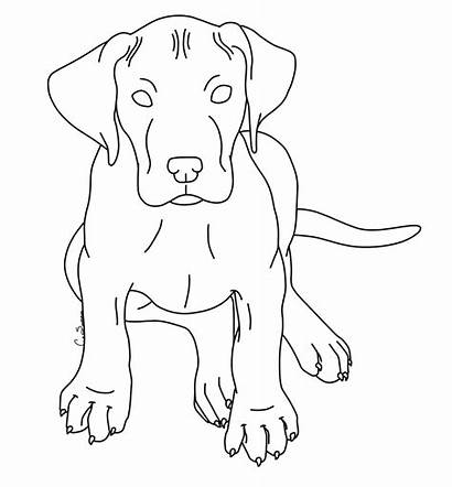 Dane Puppy Coloring Pages Dog Deviantart Realistic