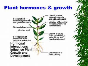 GK Questions and Answers on Biology: Plant Hormones